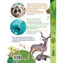 О животных и растениях — фото, картинка — 11