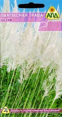 """Пампасная трава """"Белая"""""""