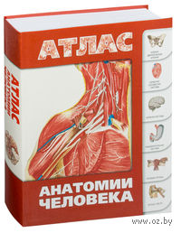 Атлас анатомии человека. С. Левкин