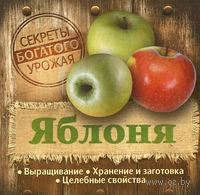 Яблоня. Выращивание. Хранение и заготовка. Целебные свойства