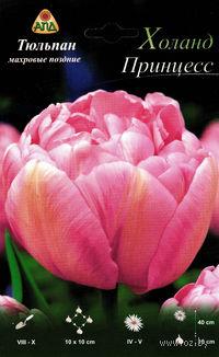 "Тюльпан махровый поздний ""Холанд Принцесс"""
