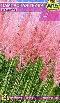 """Пампасная трава """"Розовая"""""""