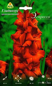 """Гладиолус крупноцветковый """"Эспрессо"""""""