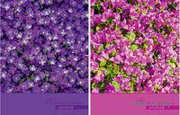 "Блокнот ""Bloom of nature"" (в клетку)"