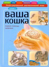 Ваша кошка. Георгий Галанин