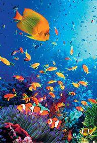 """Пазл """"Тайны океана"""" (247 элементов) — фото, картинка"""