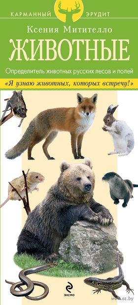 Животные. Определитель животных русских лесов и полей. Ксения Митителло