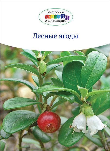 Лесные ягоды — фото, картинка