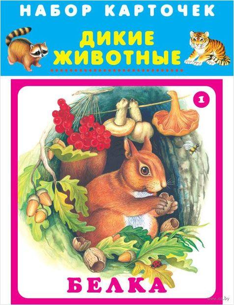 Дикие животные. Набор карточек в целлофане — фото, картинка