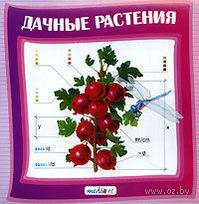 Дачные растения