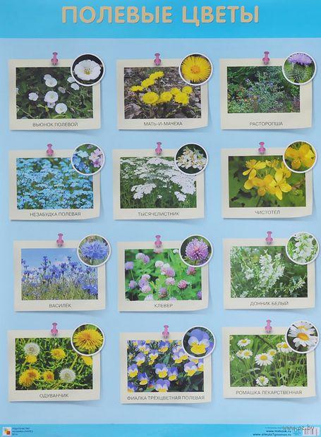 Полевые цветы. Плакат — фото, картинка