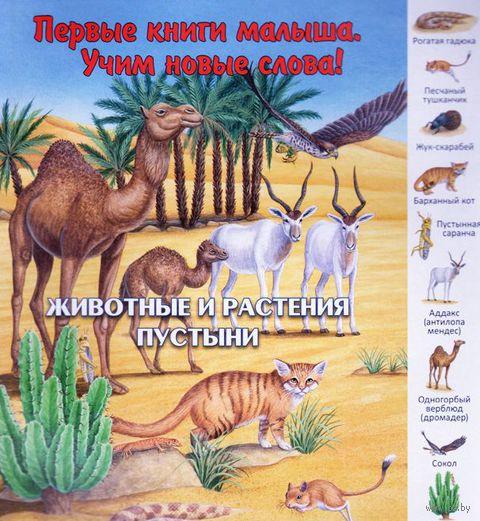 Животные и растения пустыни — фото, картинка