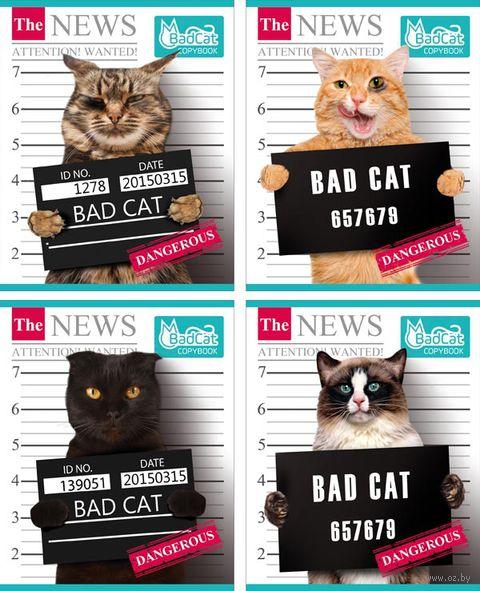"""Тетрадь полуобщая в клетку """"Bad Cat"""" (48 листов; в ассортименте)"""