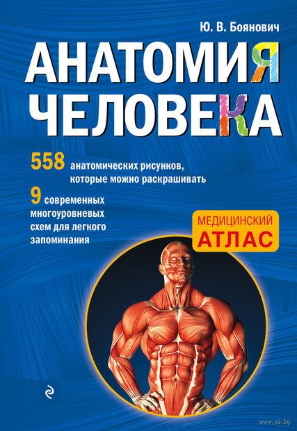 Анатомия человека — фото, картинка