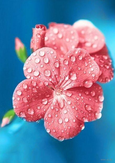 """Алмазная вышивка-мозаика """"Роса"""" (270х380 мм) — фото, картинка"""
