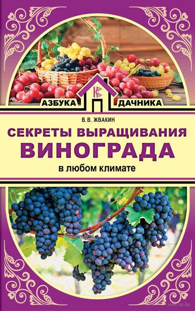 Секреты выращивания винограда в любом климате — фото, картинка