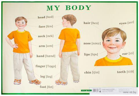 Строение тела человека. Плакат