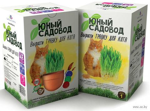 """Набор для выращивания растений """"Юный садовод. Травка для кота"""" — фото, картинка"""