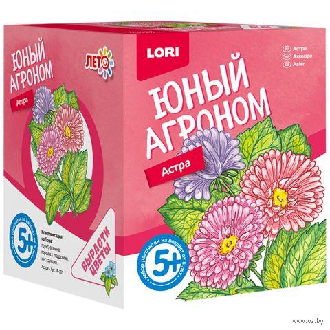 """Набор для выращивания растений """"Астра"""" — фото, картинка"""