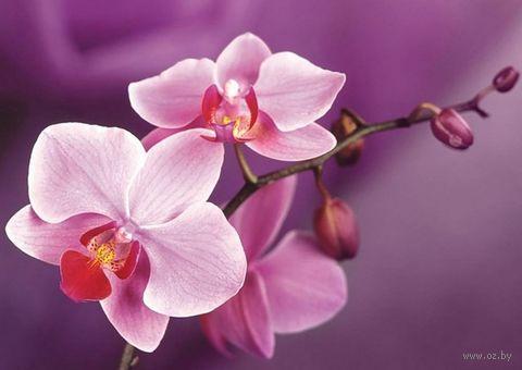 """Алмазная вышивка-мозаика """"Ветвь орхидеи"""" (270х380 мм) — фото, картинка"""