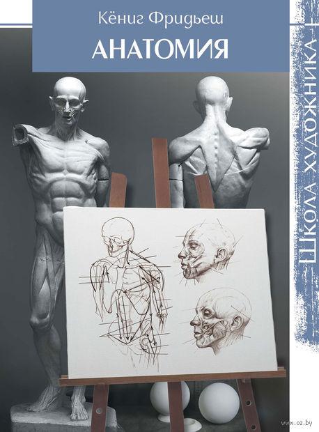 Анатомия. Школа художника. Кениг Фридьеш