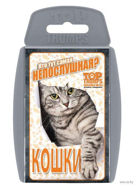 Козырные карты. Кошки — фото, картинка