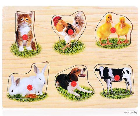 """Рамка-вкладыш """"Домашние животные"""" — фото, картинка"""