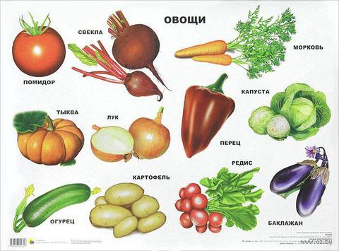 Овощи. Плакат — фото, картинка