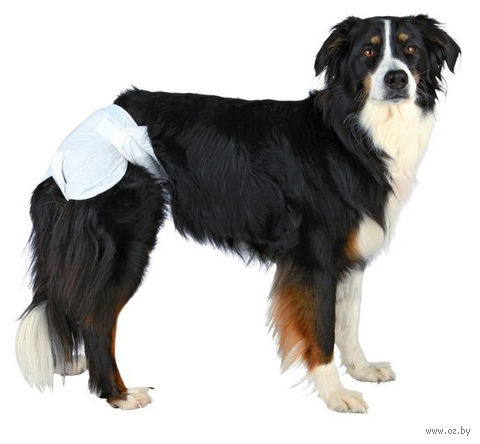 Подгузники для собак (12 шт.; M; 32-48 см) — фото, картинка