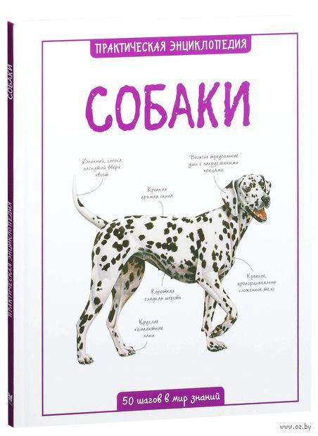 Собаки — фото, картинка