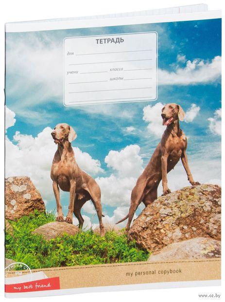 """Тетрадь в клетку 12 листов """"Питомцы. Собаки. My best friend"""""""