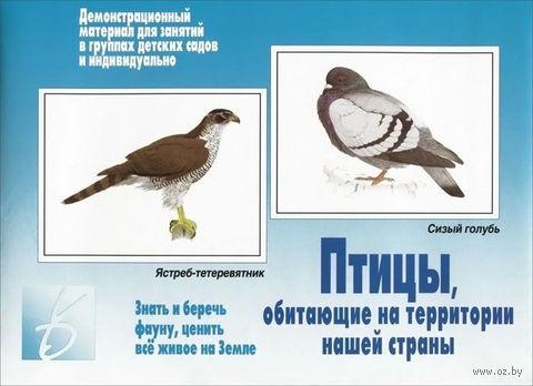 """Игра """"Птицы, обитающие на территории нашей страны"""""""