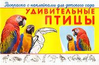 Удивительные птицы. Раскраска с наклейками для детского сада — фото, картинка