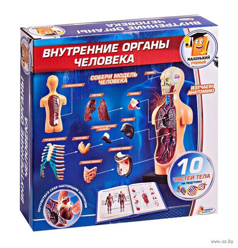 """Сборная модель """"Внутренние органы человека"""" — фото, картинка"""