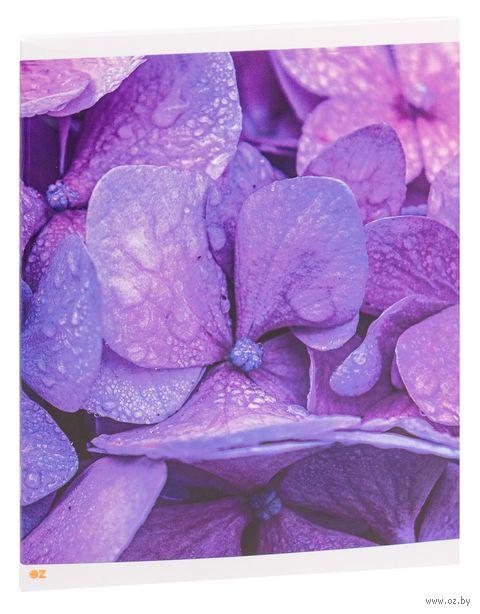 """Тетрадь полуобщая в клетку """"Lavender"""" (48 листов) — фото, картинка"""