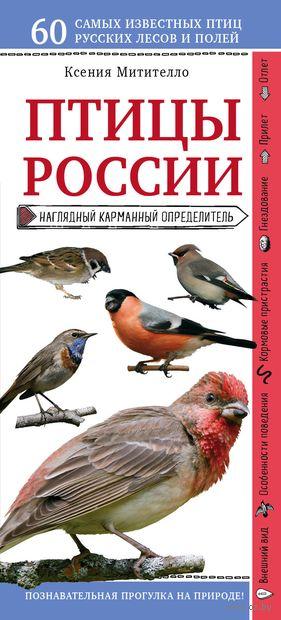 Птицы России. Наглядный карманный определитель — фото, картинка