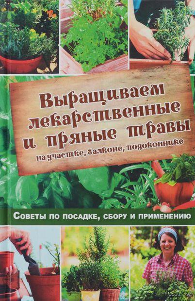 Выращиваем лекарственные и пряные травы на участке, балконе, подоконнике. Советы по посадке, сбору и применению — фото, картинка