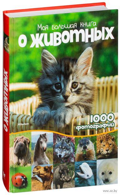 Моя большая книга о животных — фото, картинка