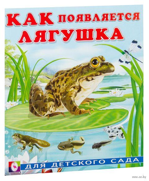 Как появляется лягушка — фото, картинка