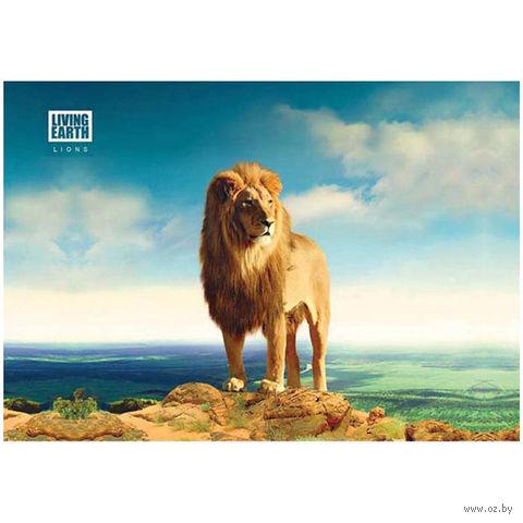 """Альбом для рисования А4 """"Животные. Живая планета"""" (20 листов)"""