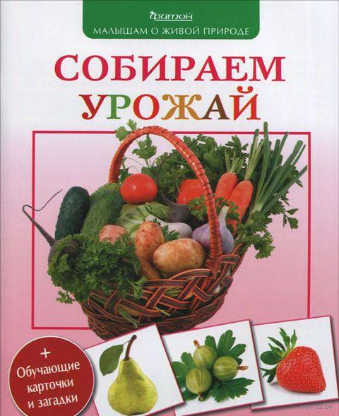 Собираем урожай — фото, картинка