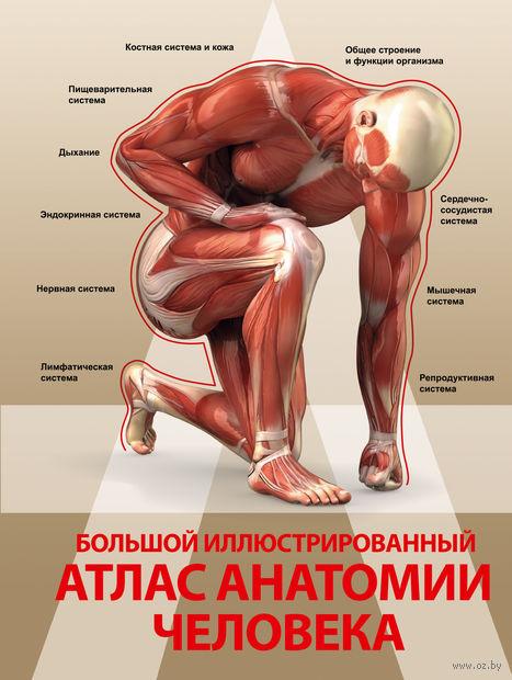 Большой иллюстрированный атлас анатомии человека. Анна Спектор