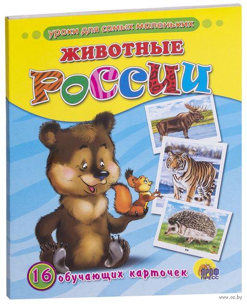 Животные России. 16 обучающих карточек