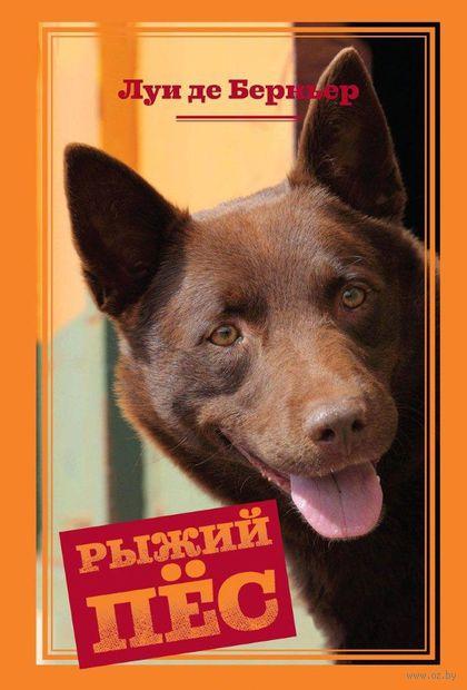 Рыжий пес — фото, картинка