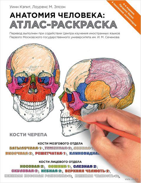 Анатомия человека. Атлас-раскраска. Л. Элсон, У. Кэпит