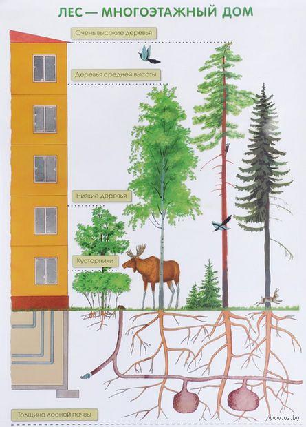 Лес - многоэтажный дом. Плакат — фото, картинка