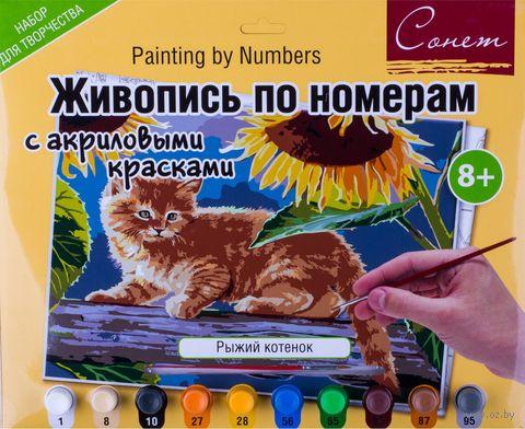 "Картина по номерам ""Рыжий котенок"" (300х420 мм) — фото, картинка"