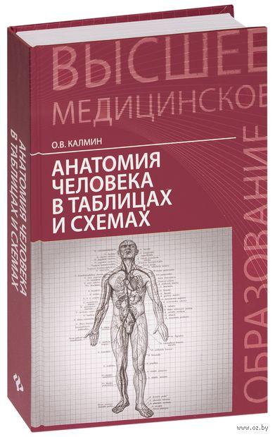 Анатомия человека в таблицах и схемах. Олег Калмин