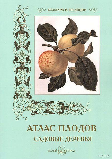 Атлас плодов — фото, картинка