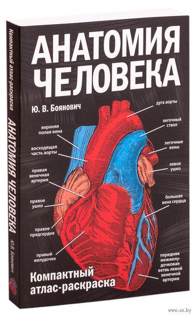 Анатомия человека. Компактный атлас-раскраска — фото, картинка